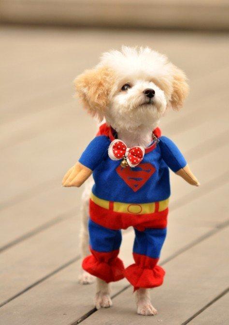 CAT SUPERMAN