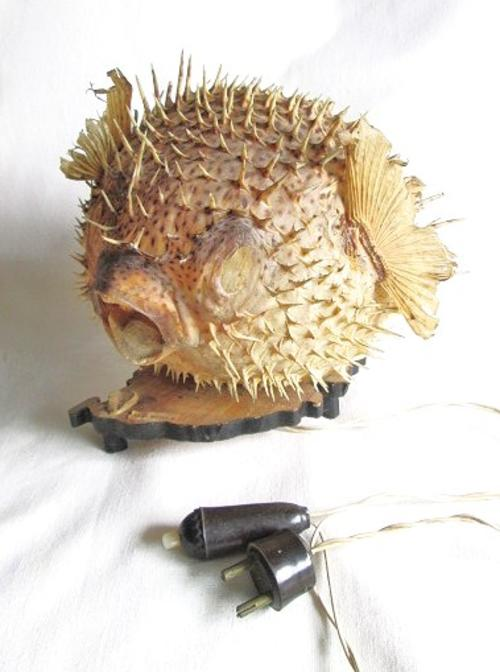 Other lighting vintage taxidermy spotted puffer fish for Puffer fish lamp