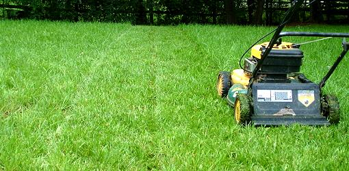 Unusual Items Lawn Care Diy Step By Step Disk The