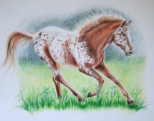 horse pet portrait in coloured pencil