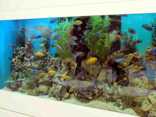 Fish tank maintenance service cost newcastle 2017 fish for Fish tank cleaning service near me
