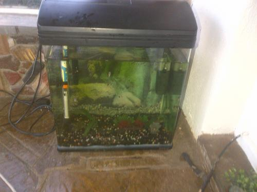 Fish tanks aquariums very nice buyo black tank with for Fish tank with built in filter