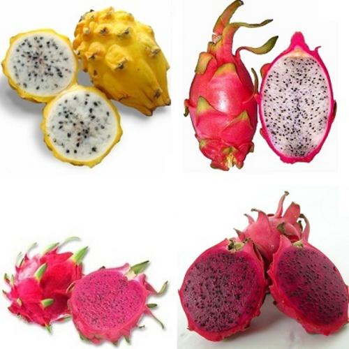 Seeds - *** NEW *** Dragon Fruit Package - Golden, Red ...