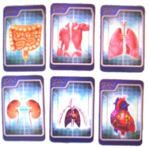 organs of human body. HUMAN BODY 3D MODEL