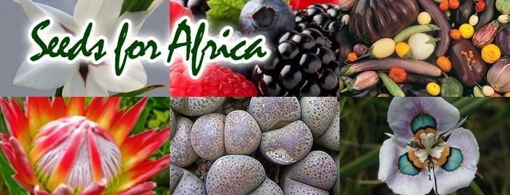 Seeds for Africa Store on bidorbuy